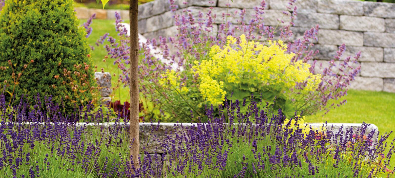 Beet mit Blumen für Bienen